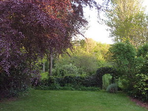 pictures and words. back garden with beech and arch